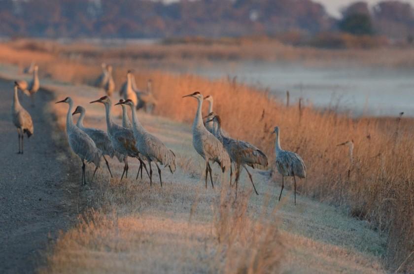 161031bbcut-cranes1