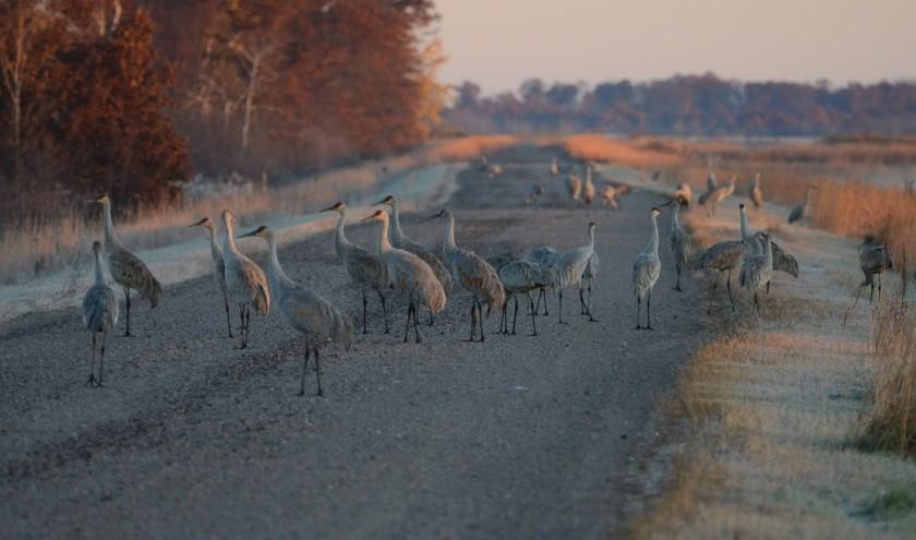 161031bbcut-cranes2