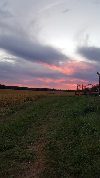 "The Roller of Spring Valley, Wisconsin: ""Sunset at my farm, 50 MILES EAST OF MSP."""