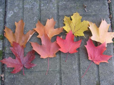 """Our theater of seasons ... Writes Lola: """"So many pretty leaves this fall."""""""