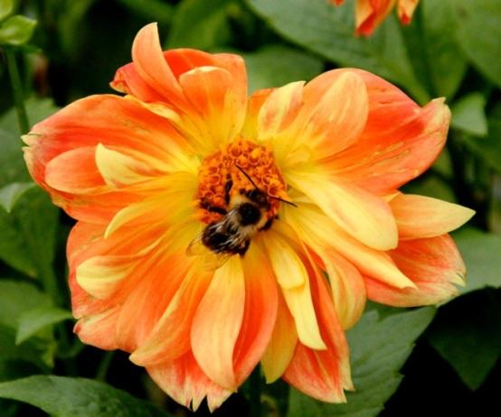 161109bbcut-bee1