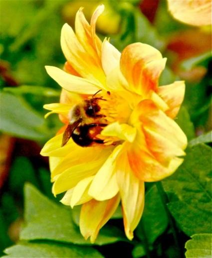 161109bbcut-bee2