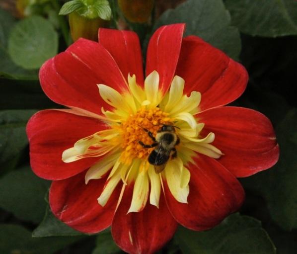 161109bbcut-bee3