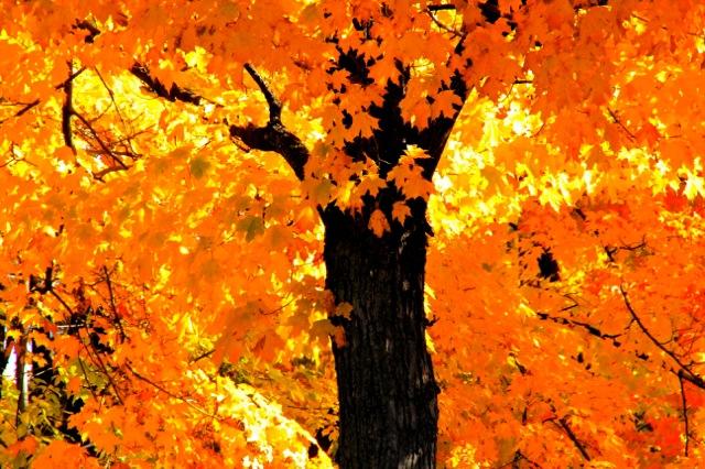 161111bbcut-goldentree1