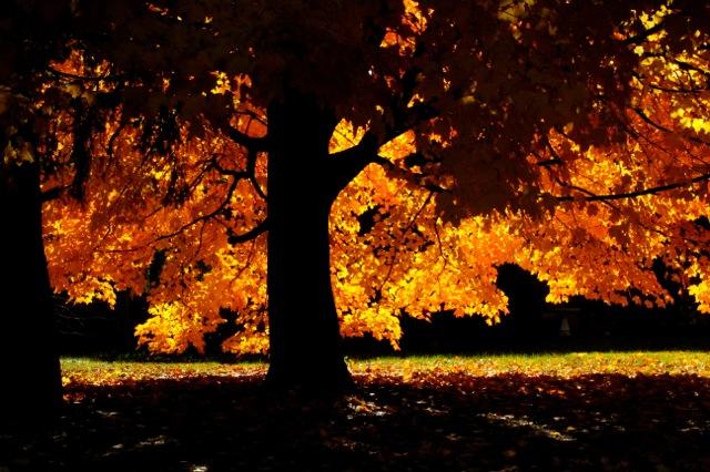 161111bbcut-goldentree2