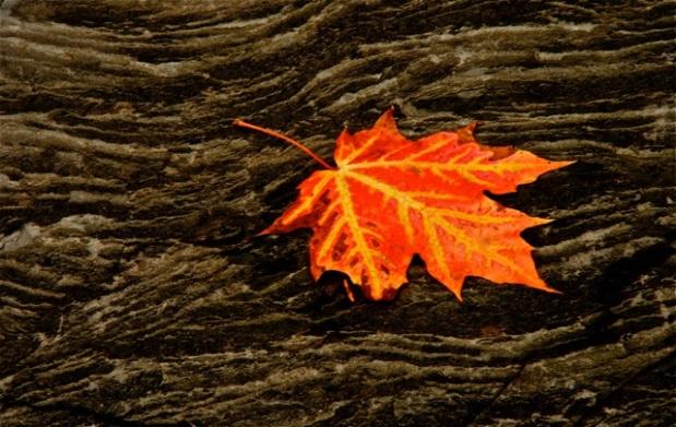 161116bbcut-leafonrock