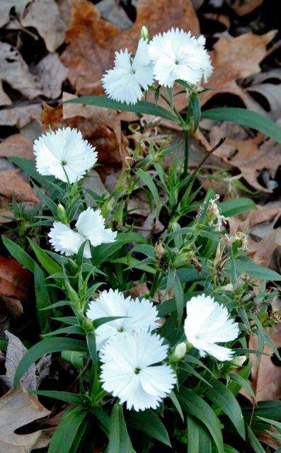 161119bbcut-flower2