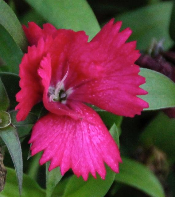 161119bbcut-flower3