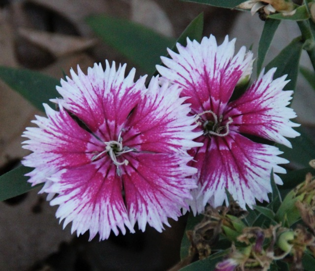161119bbcut-flower4