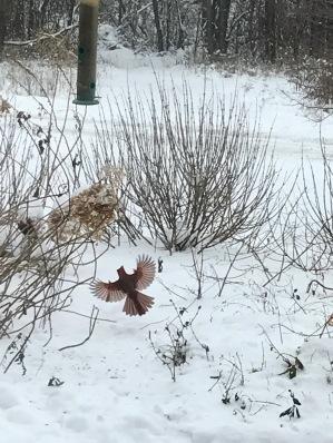 161214bbcut-cardinalwings