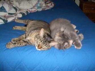161227bbcut-lazycats