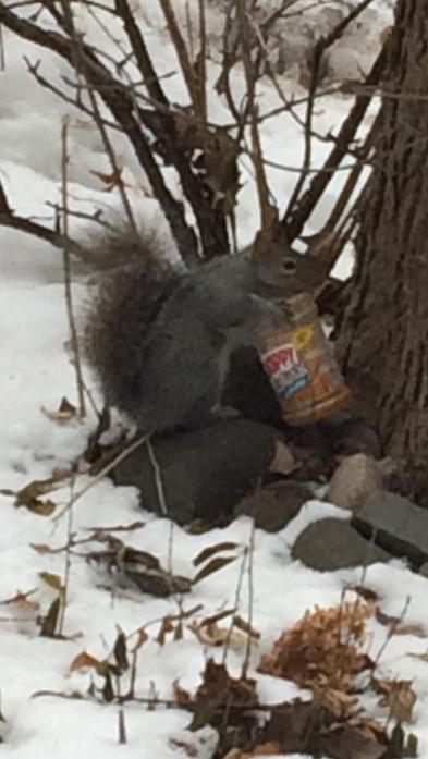 170102bbcut-skippysquirrel