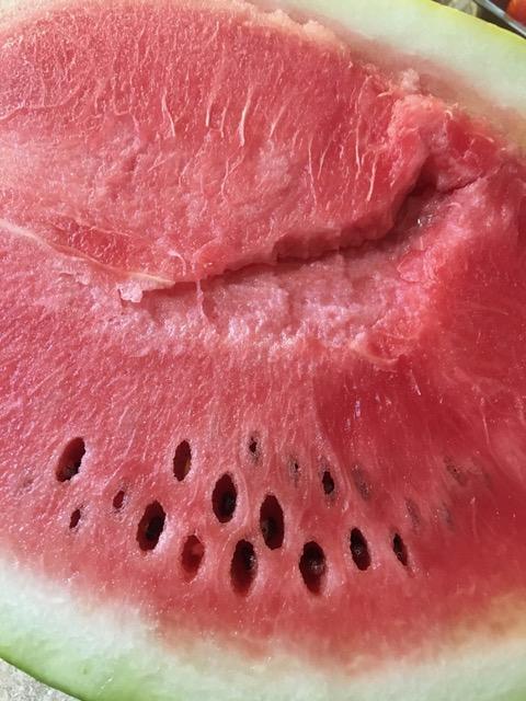 170112bbcut-watermelon2