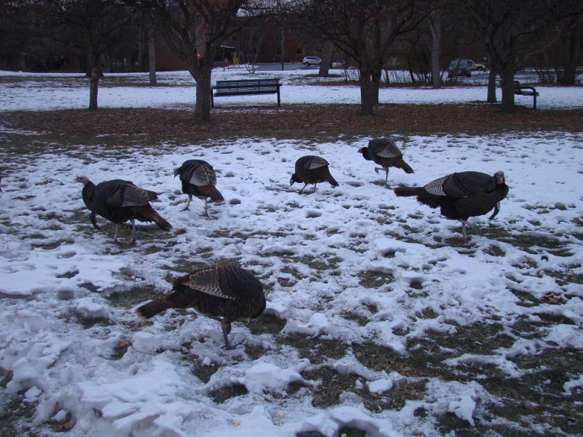 170113bbcut-coldturkeys1