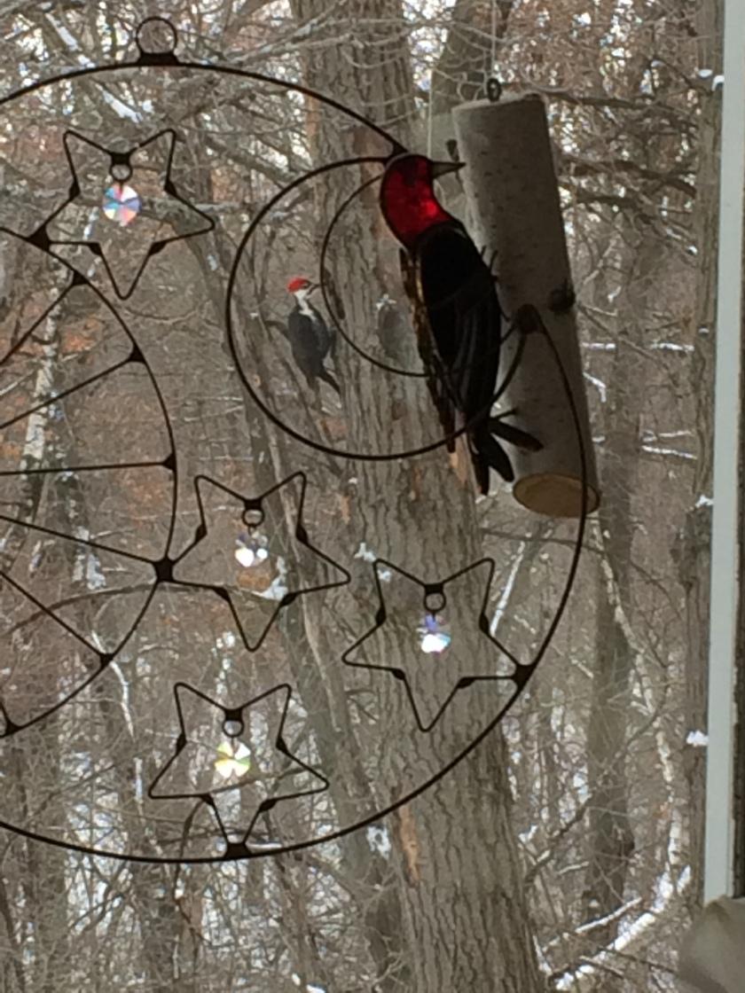 170128bbcut-twopeckers