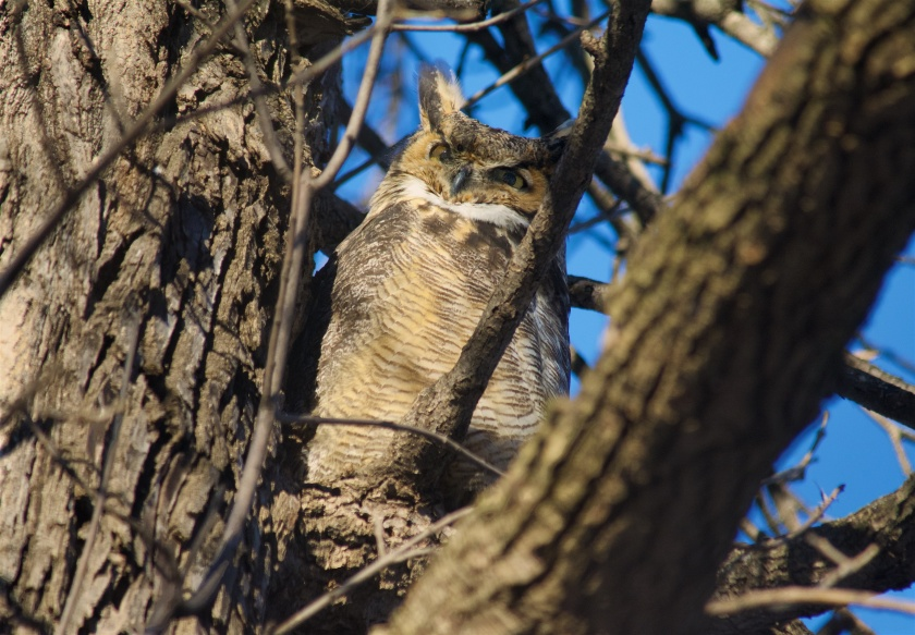 170203bbcut-owl