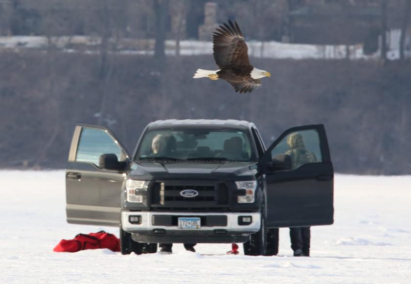 170206bbcut-eagle4