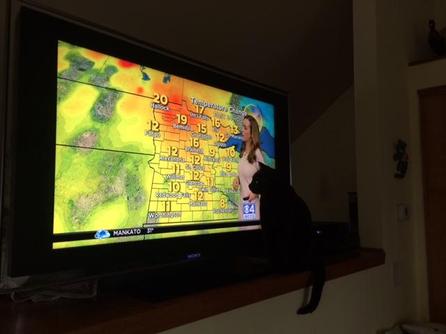 170217bbcut-weathercat