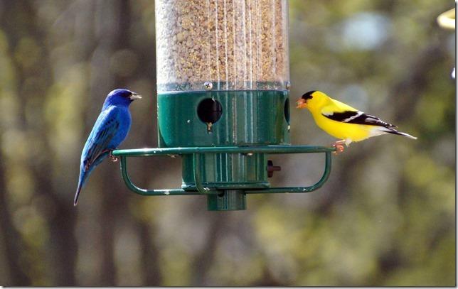 170219bbcut-birds1