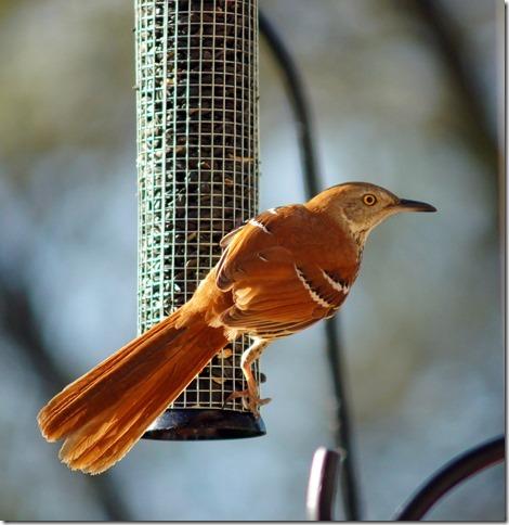 170219bbcut-birds2