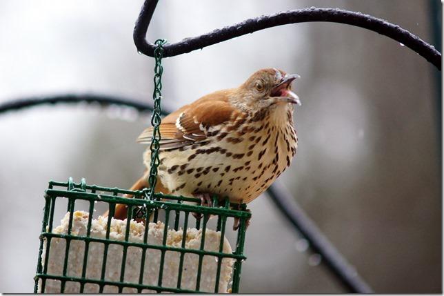 170219bbcut-birds3