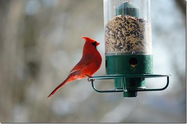 170219bbcut-birds4