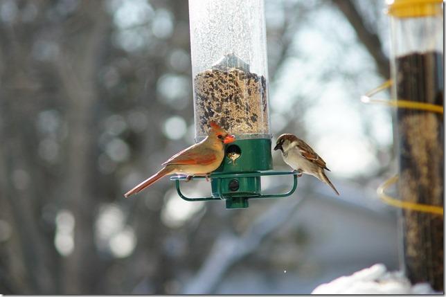 170219bbcut-birds5