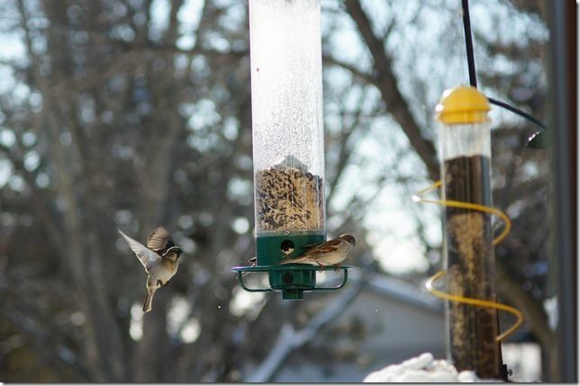 170219bbcut-birds6