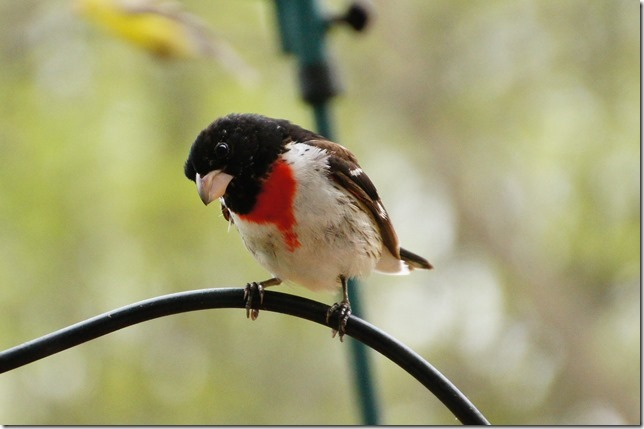 170219bbcut-birds7