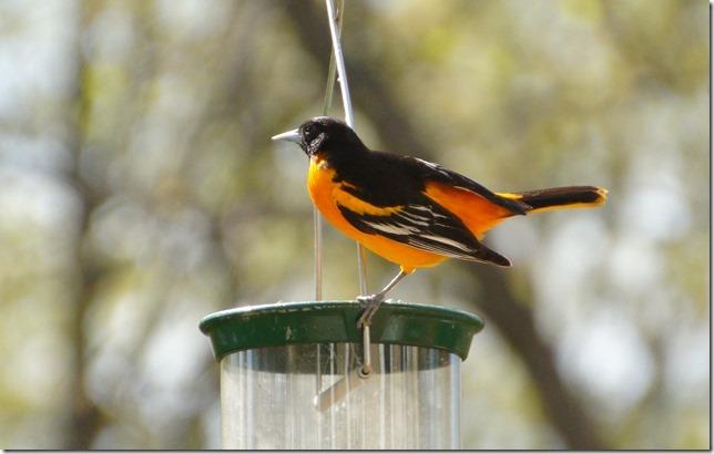170219bbcut-birds8