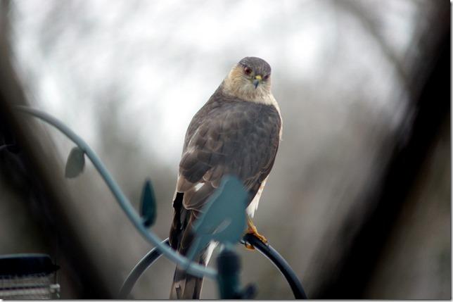 170219bbcut-birds9