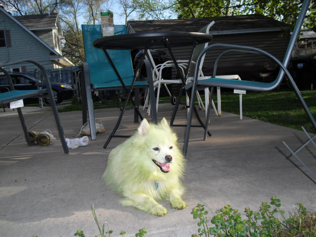 170319bbcut-greendog