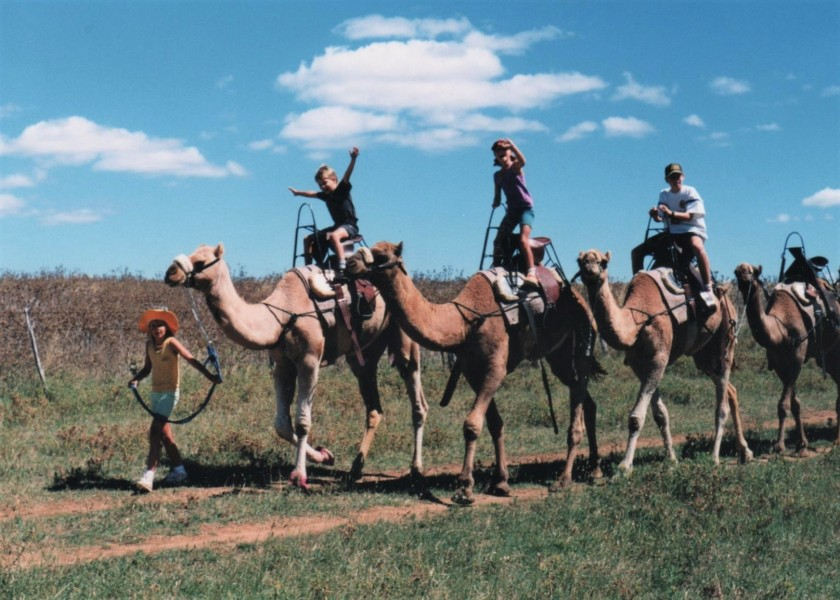 170412bbcut-camels