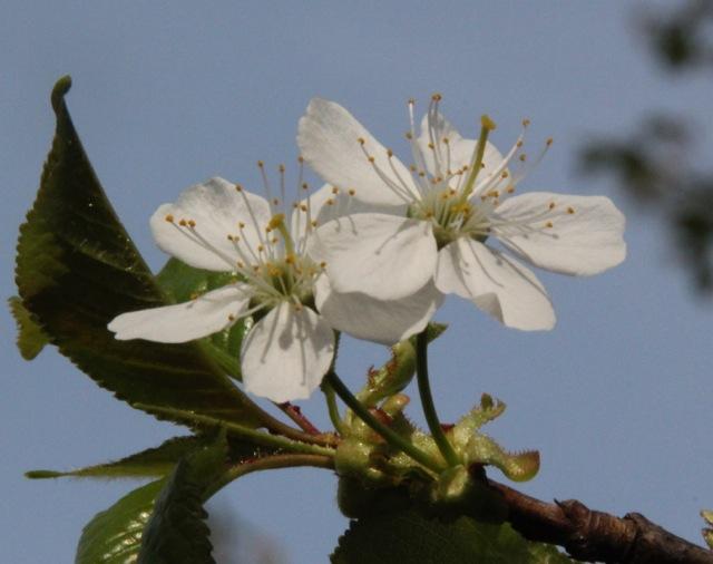 170415bbcut-springflowers2