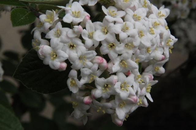 170415bbcut-springflowers3