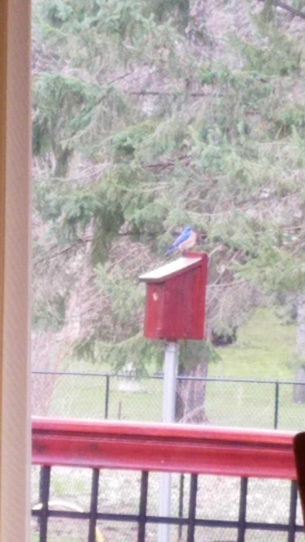 170417bbcut-bluebird