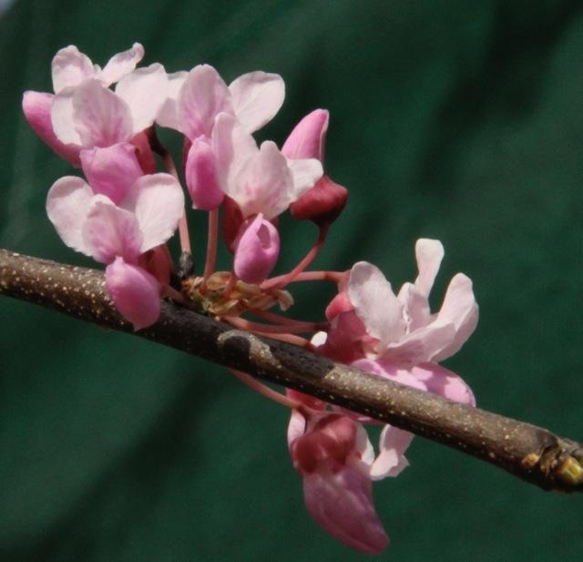 170417bbcut-spring2