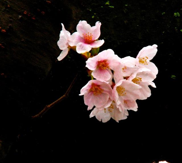 170420bbcut-flowers1