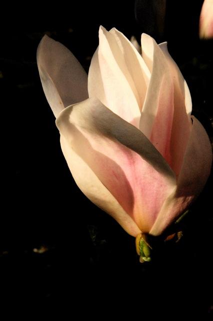 170420bbcut-flowers2
