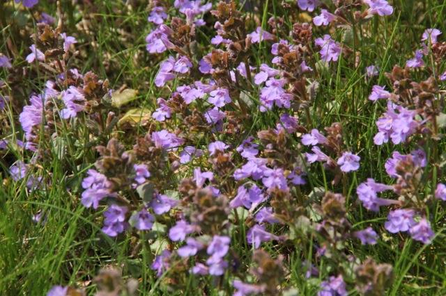170425bbcut-purple4