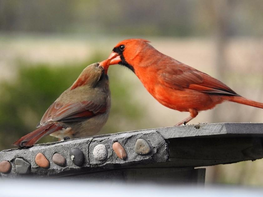 170.504bbcut-cardinals