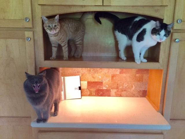 170531bbcut-cats1