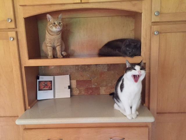170531bbcut-cats2