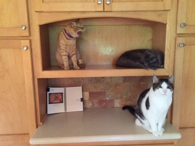 170531bbcut-cats3