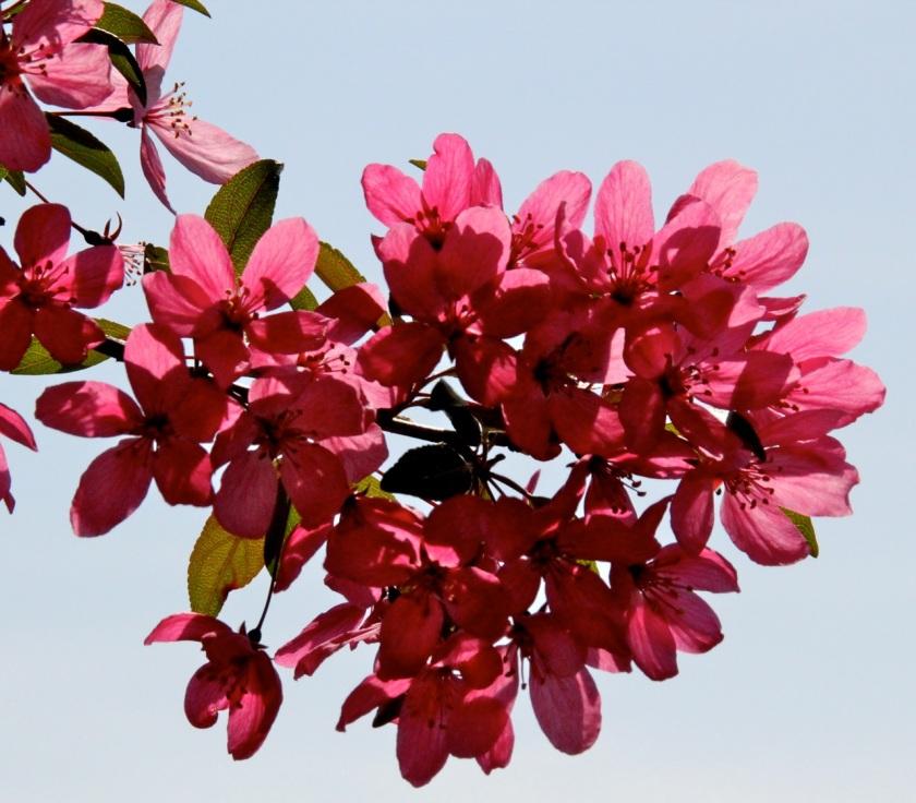 170601bbcut-blossoms4