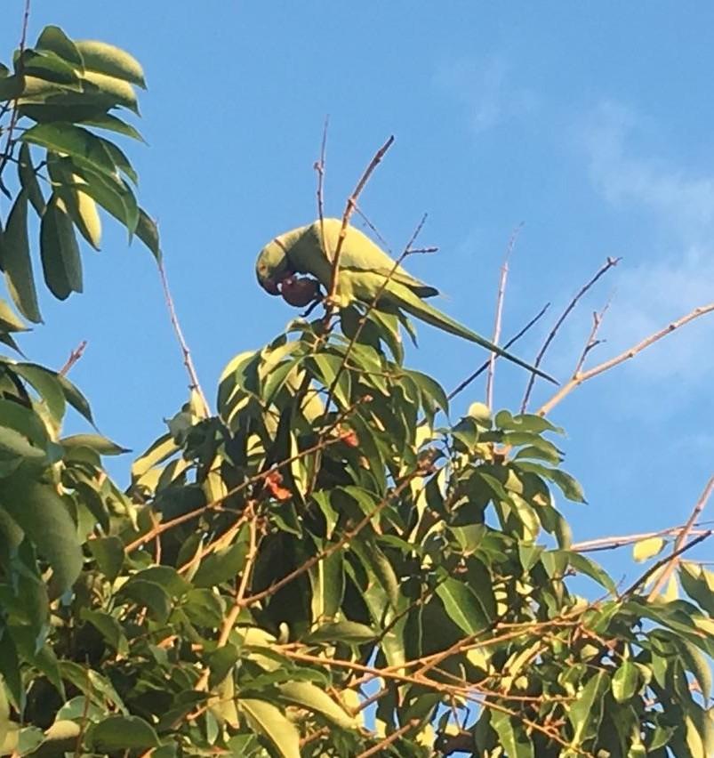 170612bbcut-parrot2