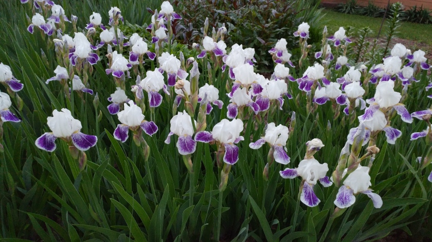 170616bbcut-flowers2