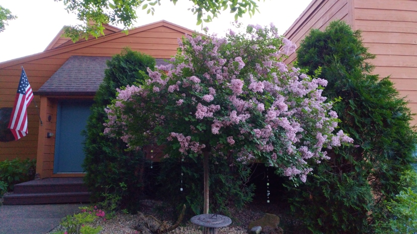 170616bbcut-flowers3