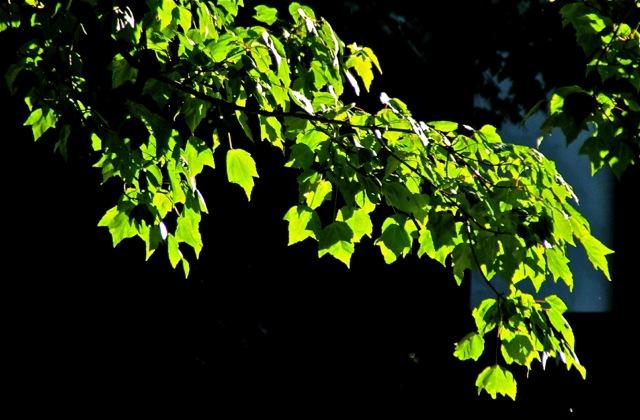 170617bbcut-summerevening2