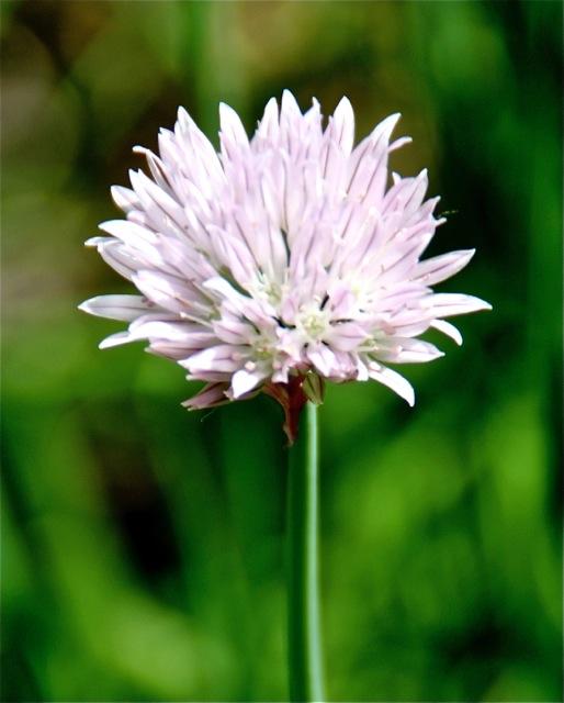 170620bbcut-blossom1